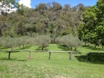 Monteverde Olives Queensland Grove